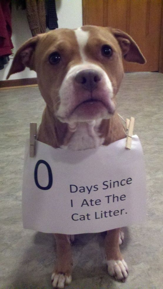 M Dog Ate Cat Litter