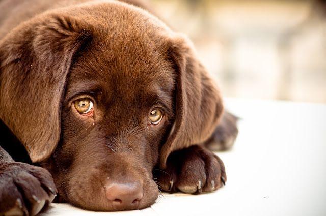 Punição para o autor do crime contra o cachorro que teve o seu genital mutilado · Change.org