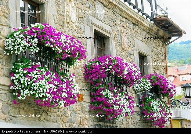 41 best images about balcony flower pots on pinterest for Balcony flowers