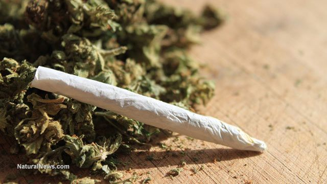 Medical marijuana legalization reduces painkiller overdose deaths. Who could have guessed that there was up to a 33 percent reduction in opioid overdose deaths among the 13 states that allow medical marijuana? The study's results were published late August 2014, surprisingly, in the Journal of the American Medical Association (JAMA).