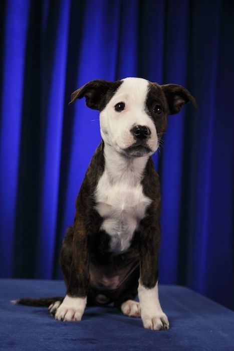 Puppy Bowl is coming up!
