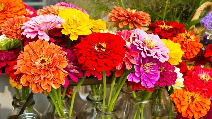 These annuals bloom in vivid colors from summer until frost and are a snap to grow from seeds.