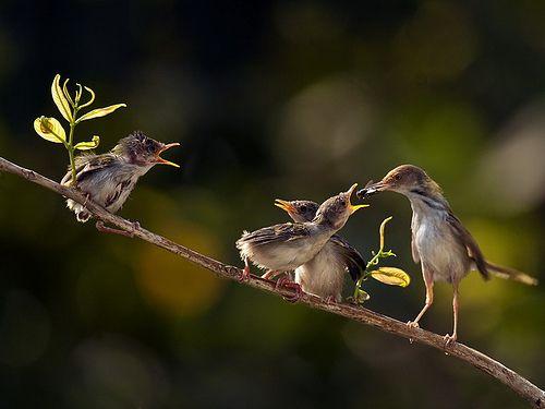 Chrip,chrip,...Bi Yanen31, Cravings, Breakfast, Feeding Baby, Animals Birds, Don T Forget, Beautiful Birds, Happy Birds2, Feathers Friends
