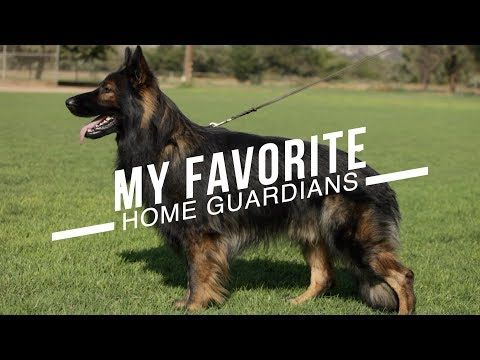 Best Dog Breeds For Home Protection No Training Necessary