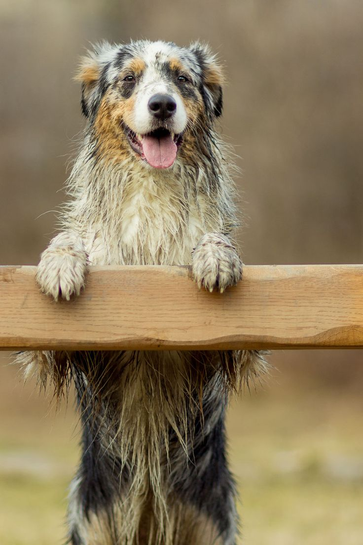.    Dirty dog = Happy dog / / Erdik Slabotka