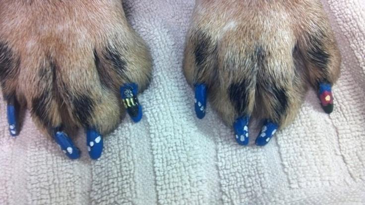 Quelli che mettono lo smalto per le unghie ai cani