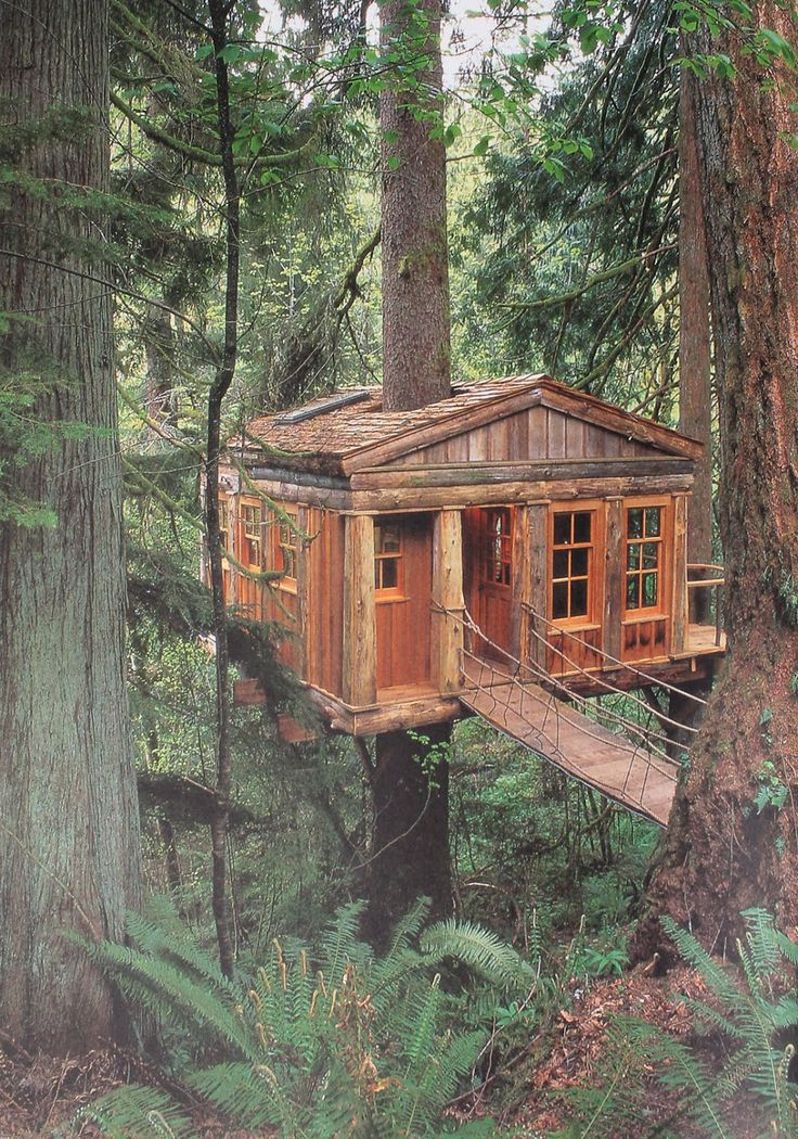 Log Cabin in the Woods | cabin-in-the-woods.jpg