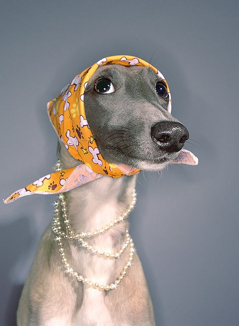 .Funny Image, Dogs, Old Lady, Dresses Up, Pets, Williams Wegman, Head Scarf, Animal, Italian Greyhounds