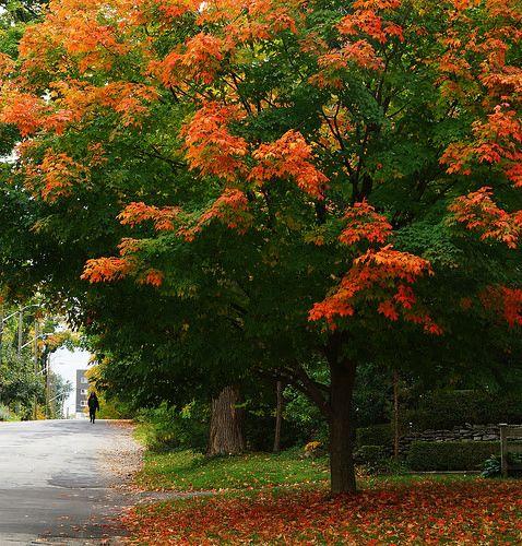 Waterloo street in Autumn   Flickr - Photo Sharing!