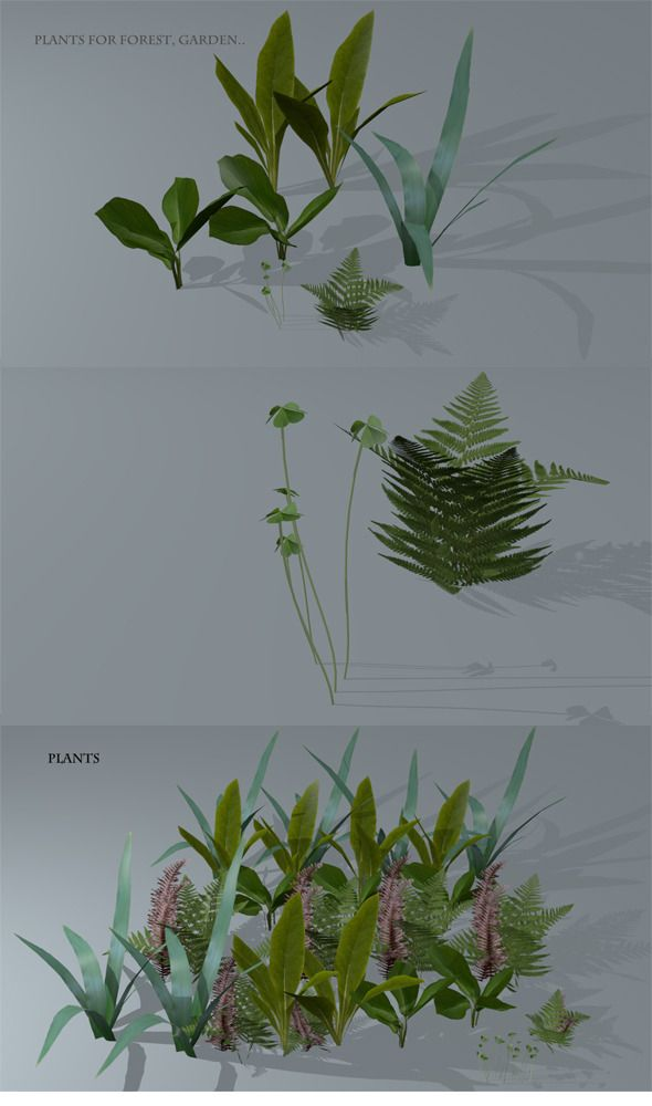 3DOcean Low Poly Plants 6486286