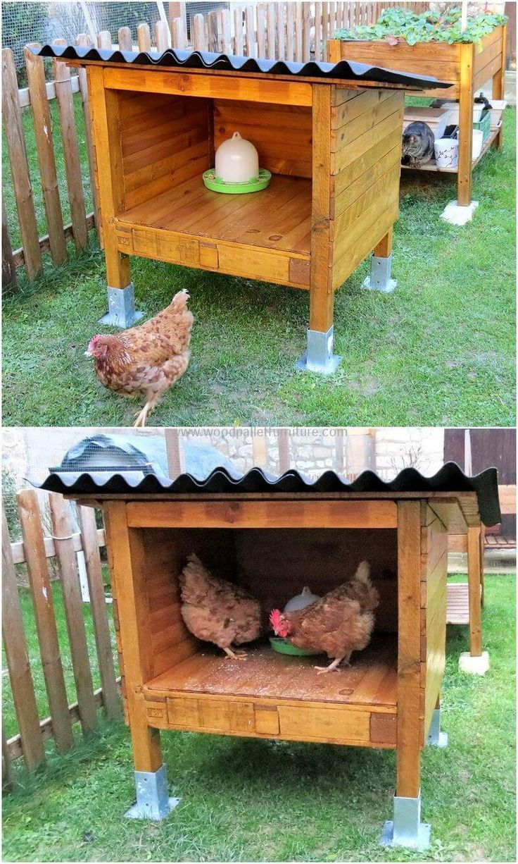 If you really love to keep some pets at home like chickens, cats etc. But worried about their safety then stop thinking about this and create this wood pallet chicken shed to provide your chicken maximum safety at cheap cost and give them a feel of protection by providing this wonderful shed.