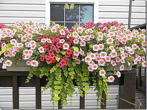: Outdoor Ideas, Garden Ideas, Outdoor Rooms, Garden Art, Jeff S Deck, Living Room, Container Gardening