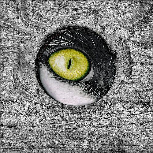 Eye Hole !!   par adrians_art