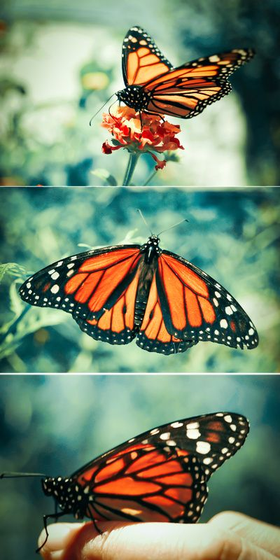butterfly Art Print. Section 6