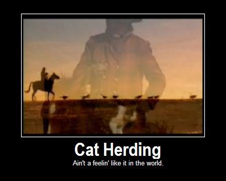 Herding Cats Quotes. QuotesGram Antonio Banderas Meme