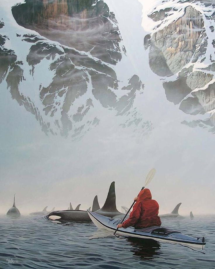 Photo from @DiscoverOcean Kayaking at Orca's cove Ketchikan Alaska. Add that to your bucket list! (Photo via TheChive.com edited pic) #Places_wow by placeswow