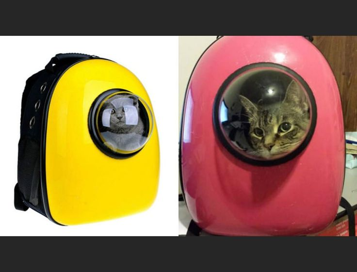 To boldy go where no feline has gone before! Pet apparel company 'U-Pet' is selling a line of bags that turns your cat into an intergalactic space explorer