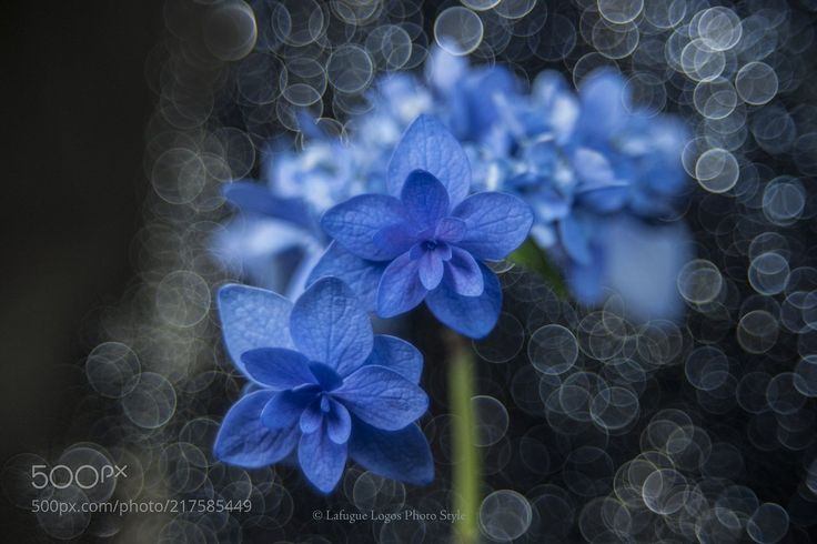Poetics of Blue (Lafugue Logos / Japan) #NIKON D3X#macro #photo #insect #nature http://pic.twitter.com/mgl0KC1Me9   Make Your Day (@awesometweeeets) June 27 2017