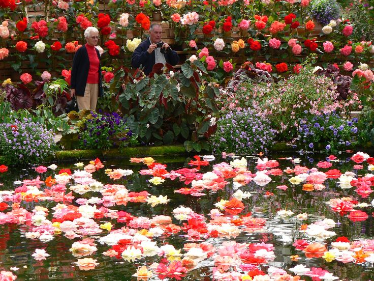 Visit this Begonia Garden in Japan with Toursgallery escorted small group tours. www.toursgallery.com