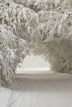 зима - #winter #winterwonderland