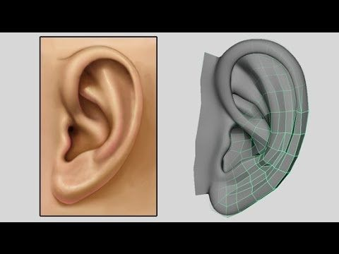 ▶ How to Model an Ear - Low Poly to Intermediate 3D Modeling Tutorial - Box Modeling - YouTube