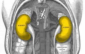 mira como eliminar instantáneamente las piedras de los riñones con estos remedios que te damos a continuación