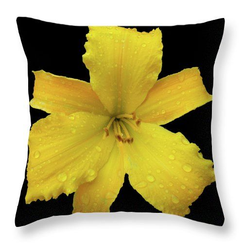 Yellow Throw Pillow featuring the photograph Raindrops On A Yellow Daylily by Tara Hutton #RaindropsonaYellowDaylily #TaraHutton #Lily #Yellow #ThrowPillow #Floral #Flower #Raindrop #Summer #Garden #HomeDecor #Interior #AccentPillow #Bedroom #FineArtAmerica