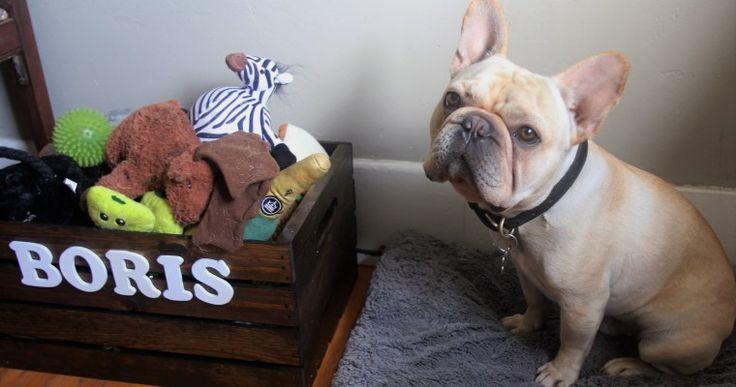 DIY Rustic Dog Toy Crate