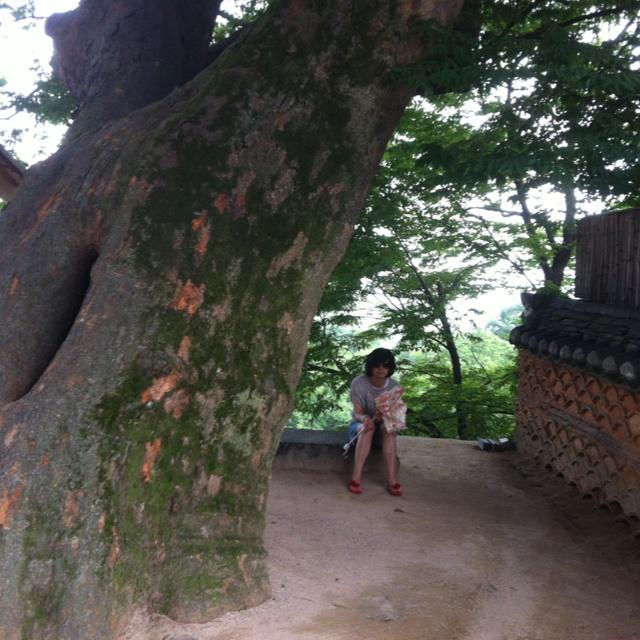 핀을 설명해 주세요...the oldest tree