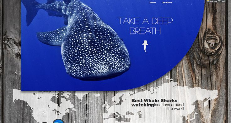 Wix Professional Web Design Swimming with whale sharks