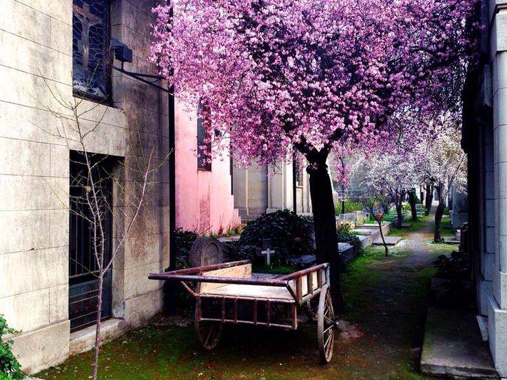 Cementerio General, Santiago ...a must visit