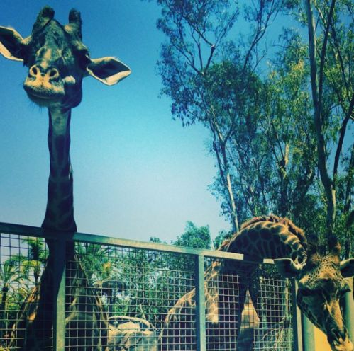 Le zoo de San Diego Kourtney Kardashian