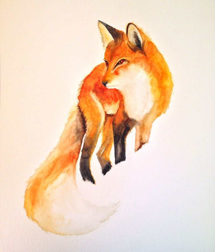 Yet another watercolour fox from my fabulous series of 'vulpes vulpes'.