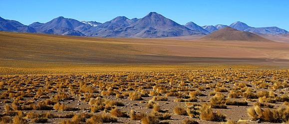 Vreemde Kontinenten   Reizen ARGENTINIË, CHILI & BOLIVIË   Woestijnen van de Altiplano