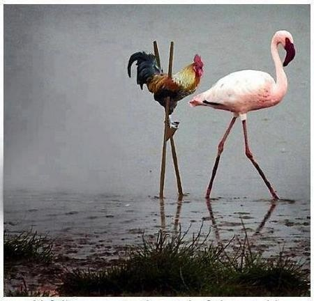 44 best images about Flamingo Funny on Pinterest | Pearl ... - photo#4