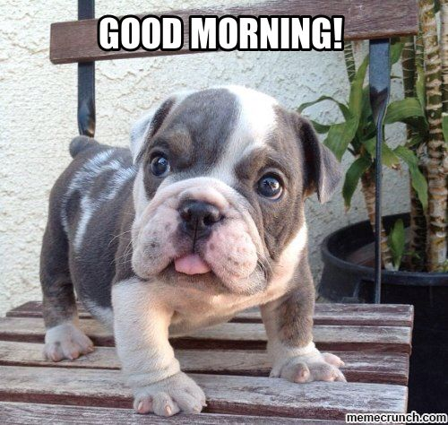 Pin By Diana Shroyer On Hello S Good Mornings And Nights Dogs