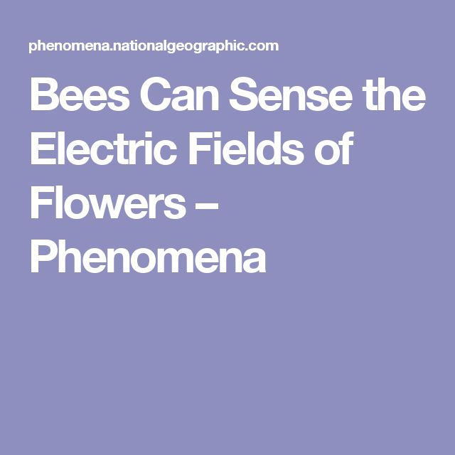 Bees Can Sense the Electric Fields of Flowers – Phenomena