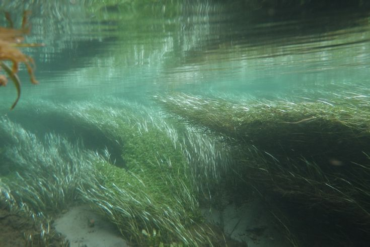 INFO SHEET: River ecosystems have flowing water, continuous physical change, different and changing microhabitats, different variable water flow rates and plants and animals that have adapted to this environment.