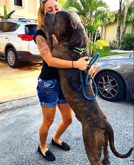 Hug me mama! XXL PITBULLS