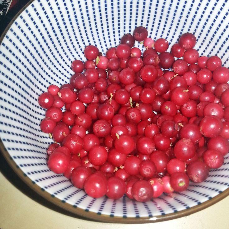 Cranberrys