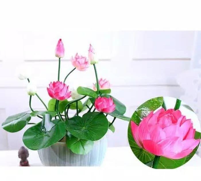 Wow 11 Desain Gambar Bunga Teratai Salah Satu Mangkuk Yang Memiliki Corak Atau Desain Bunga Teratai Ditemukan Berasal Dari M Bunga Teratai Gambar Bunga Bunga