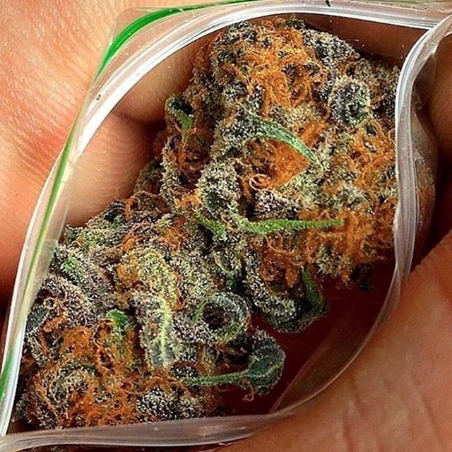 how to grow top shelf weed