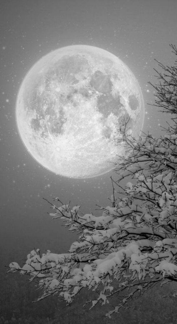 """BOOK QUOTE: """"On most nights under the winter moon, when we have made our camp, around us echo faint sounds of that other hidden world – the one of meadow and forest in the night. The melody of whippoorwill, the cry of hunting owl, the scurrying rush of vole and chasing fox. This night, the land is empty. The silence is deep in stark and open heath, the woods carry no sound.""""  — from the novel SINFUL FOLK"""