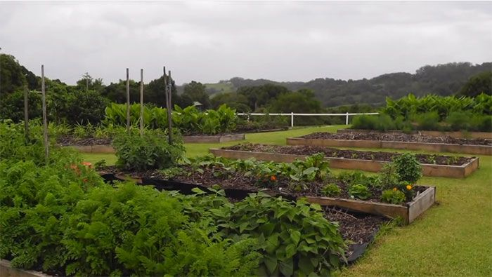 Replace+Your+Lawn+With+an+Abundance+of+Food:+90+Day+Permaculture+Transformation