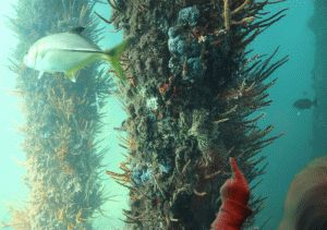 This is another close up of our visit to the Busselton Underwater Observatory in Western Australia. An aquarium, but real, wild living underwater viewing. Amazing.