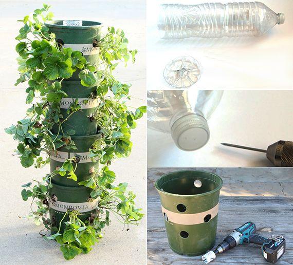 Erdbeeren-pflanzen-in-DIY-Containers---so-geht's