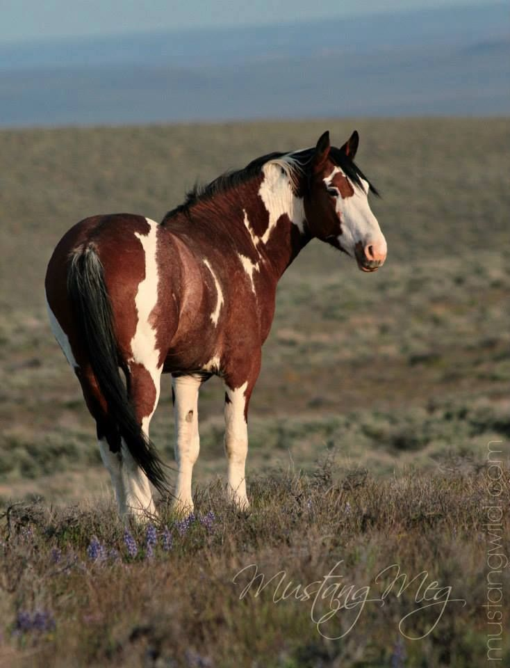 The wild horses of SE Oregon by photographer Sonya Spaziani, aka Mustang Meg, working to 'protect to preserve' wild horses and their ranges