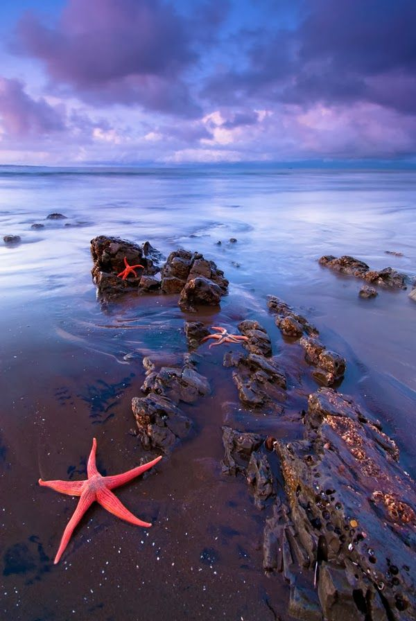 Pink Starfish in Starfish Beach, Water Cay Cayman Islands © Alvaro Espinoza