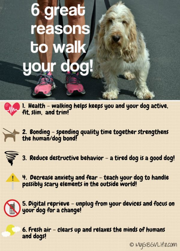 Best Dogs And Winter Images On Pinterest Cold Weather A Dog - 28 times letting your dog play in the mud wasnt a good idea