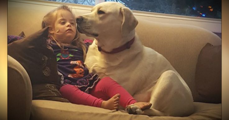 4-year-old Sadie has Down Syndrome and diabetes. But she also has Hero, her diabetic alert dog. And what this furry angel did for his tiny human is amazing!